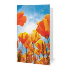 Le champ de tulipes